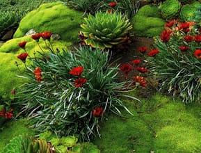 Groundcover Garden