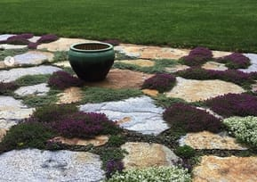 Thyme Crazy Pavers
