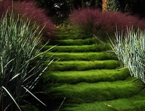 Zoysia Used As Stairs