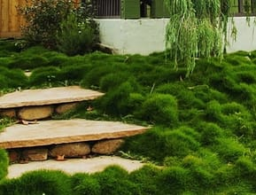 Sanstone Steps With Temple Grass